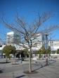 yooda20070125-1.jpg