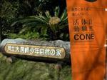yooda_cone.jpg
